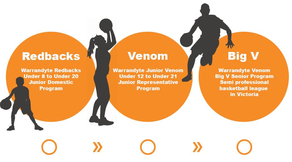 Player's pathway from Redbacks - junior domestic competition to Venom Junior Rep program to Venom Big V semi-professional competition.